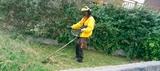 Limpieza fincas montes y jardines - foto