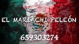 mariachi peleón en gran canaria - foto