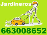 Jardineros - profesionales del cesped - foto