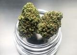 Flor Cbd (Cannabis/Marihuana Legal) - foto
