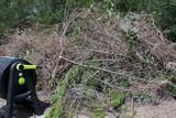 recogida de ramas y restos de poda - foto