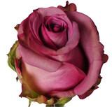 Regala rosas - foto