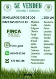 OFERTA REMOLACHA Y MILLO DEL PAÍS 0, 09 - foto