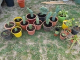 CACTUS Y PLANTAS GRASAS - foto