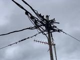 Electricistas 24h Alicante y Provincia - foto