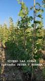 VIVERO LAS VIÑAS - foto