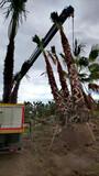 Vivero botánica plantas palmeras olivos  - foto