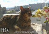 PEPA EN ADOP.  ÁLAVA-ESP (F. N.  04/2013) - foto