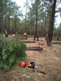 Servicios forestal - foto