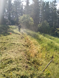 Limpieza parcelas tala y servicios jardi - foto