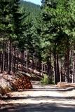 Corto Madera en Explotaciones Forestales - foto