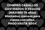 COMPRO CABALLO/YEGUA MONTADO - foto