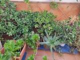 PLANTAS Y CACTUS - foto