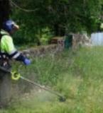 limpiamos su parcela de malas hierbas . - foto