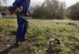 limpio su parcela de malas hierbas desbr - foto