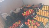 venta de melones - foto