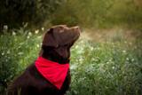 Sesiones fotos mascotas en exterior - foto