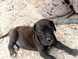 ÚLTIMOS DOGOS DISPONIBLES - foto