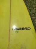 TABLA SURF EVOLUTIVA - foto