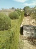 jardineros en granada - foto
