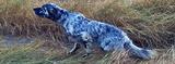 Adiestramiento y venta de perros de caza - foto