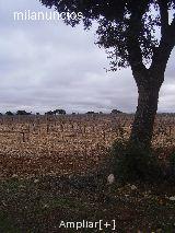 FINCA TOLEDO A 120 KMS MADRID - foto