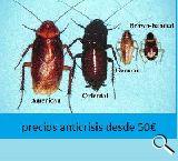 http://www.paracucarachas.com - foto